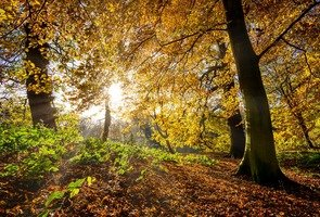 Autumn-leaves-2963223_1280