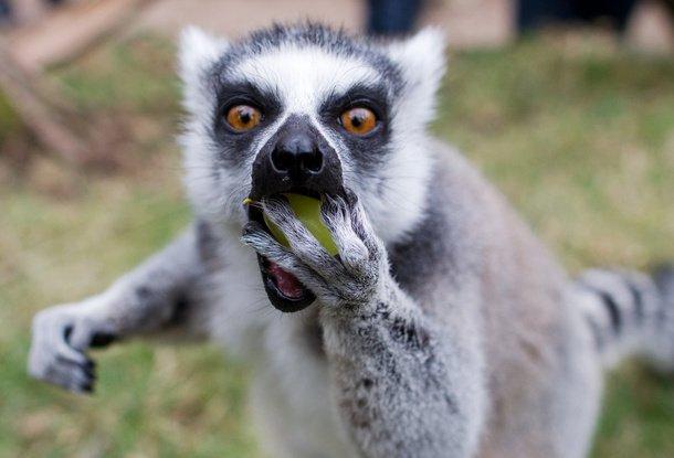 Зоопарки Чехии хотят сократить количество животных. Денег на их содержание не хватает