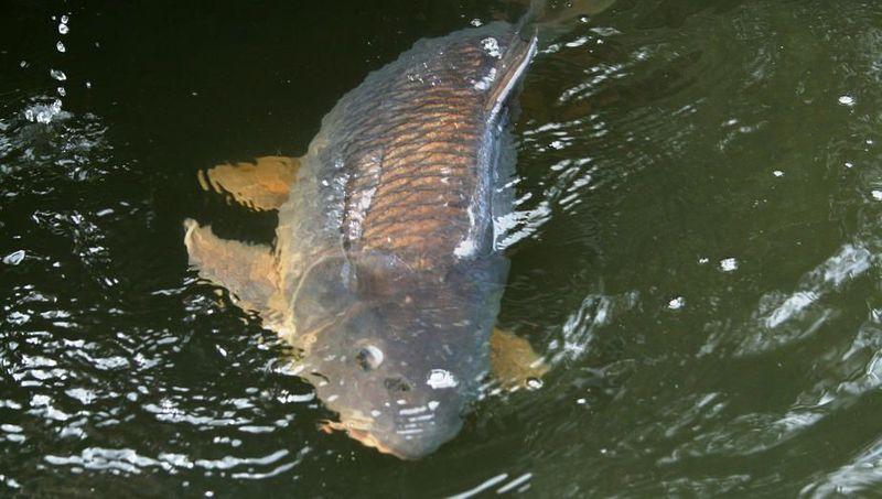 какая рыба клюет в августе